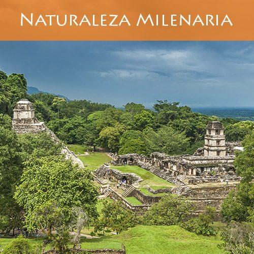 naturaleza-milenaria-portada